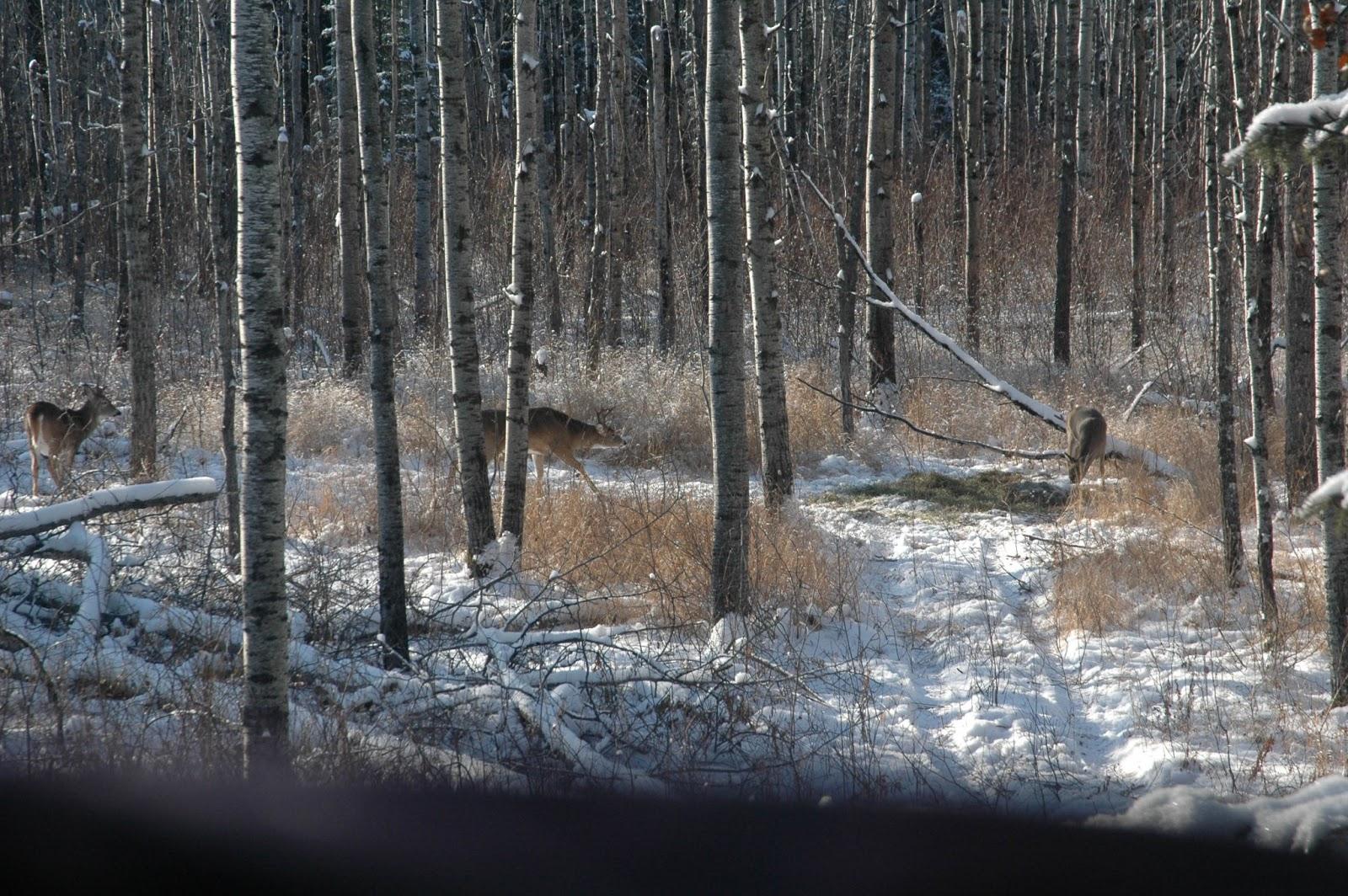 How deer survive extreme cold neu