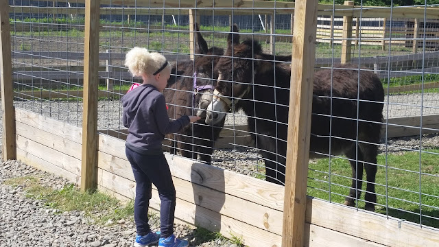 My Daughter's Field Trip:  Animal Adventure --Harpursville, NY --How Did I Get Here? My Amazing Genealogy Journey