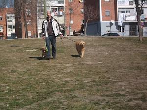 Rafa paseador de perros Madrid