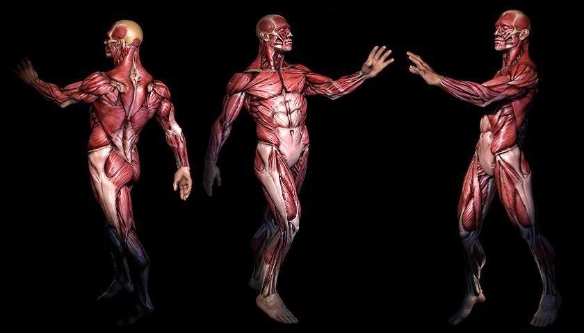El Google Maps de la anatomía   Tafoya & asociados