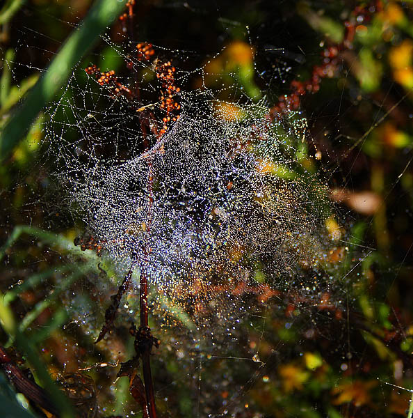 Rainbow on a wet cobweb