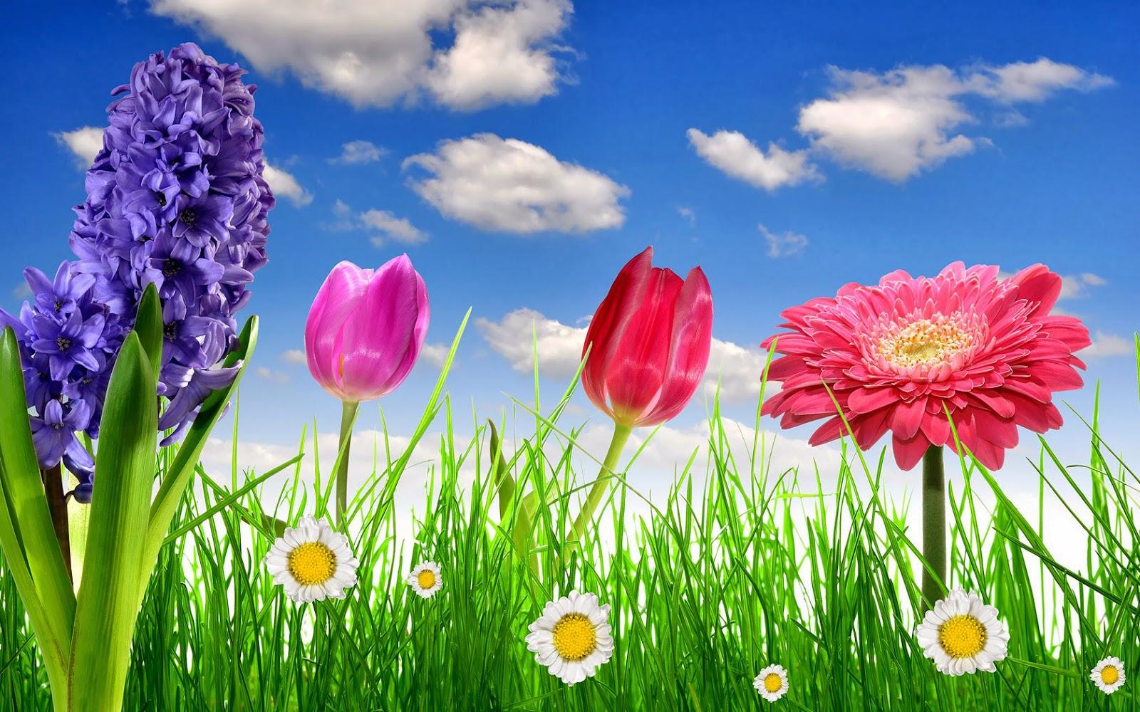 Lente foto met tulpen in verschillende kleuren