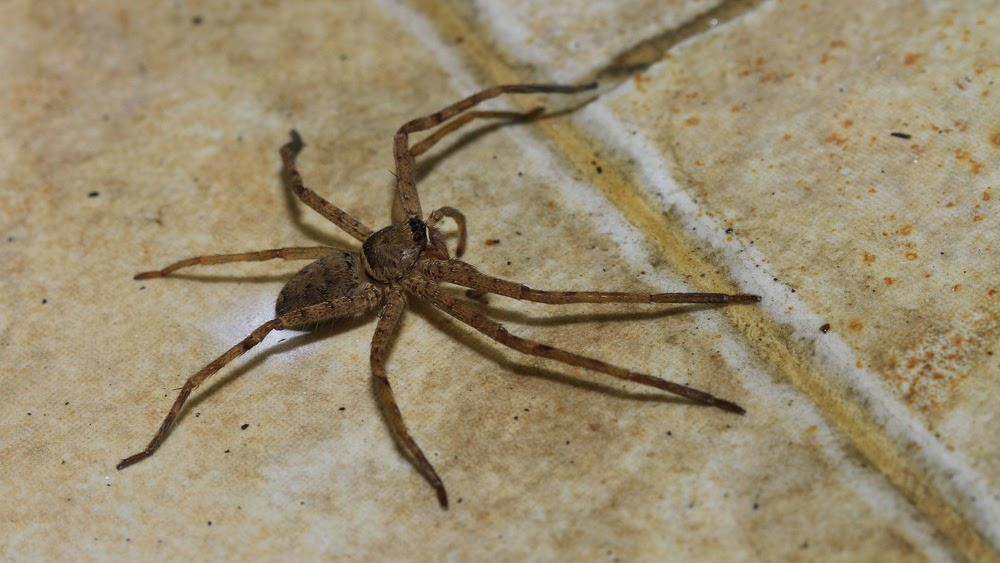 Pest Control - Spider Control In House