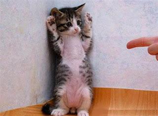 Gato com patas ao ar