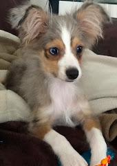 Grand Dog #2