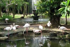 Daftar Tempat Wisata di Bali yang Menarik