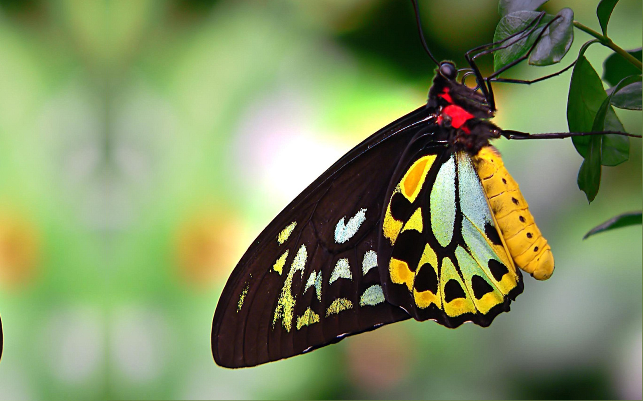 Butterfly | The Biggest Animals Kingdom