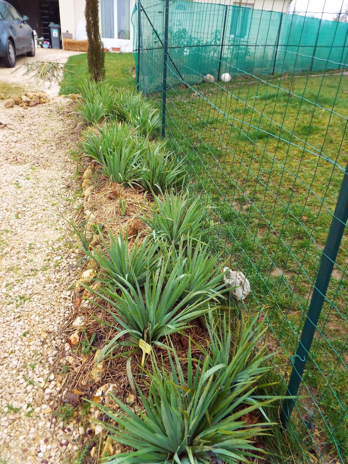 Jardin aux quatre saisons r alisation d 39 une bordure for Bordure de jardin en bambou pas cher