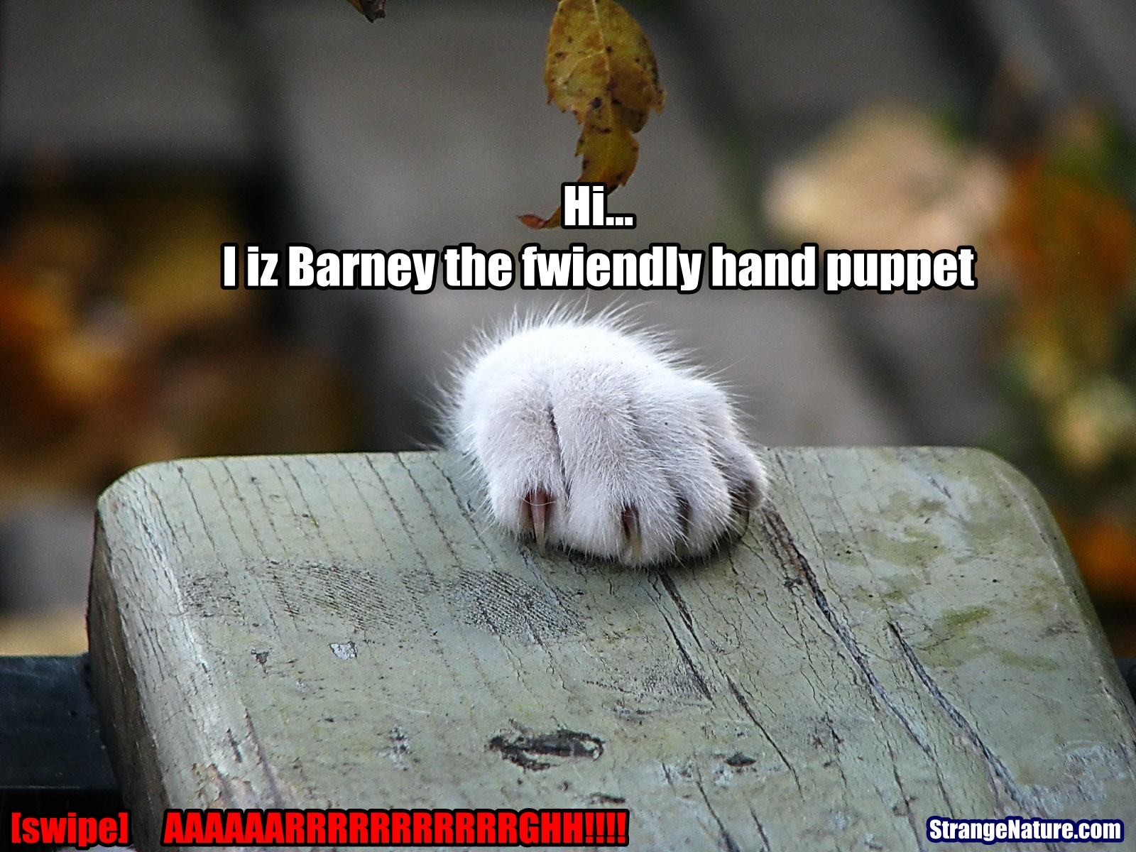 Funny cat pictures, cute cat pictures, LOLcat pictures and funny ...