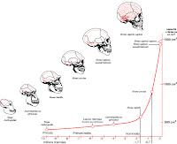 Brain Evolution2