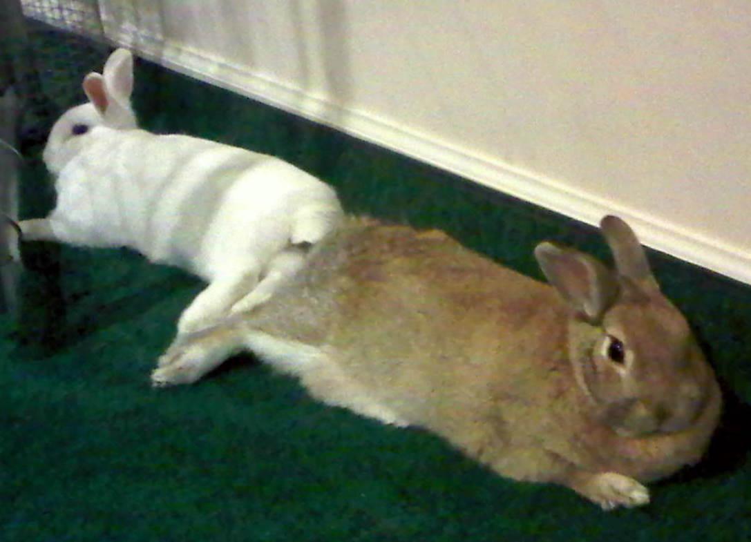 Rabbit Ramblings: June 2011
