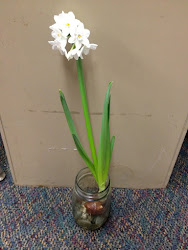 Our Bulb has Blossomed