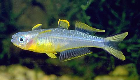 Serba Serbi Ikan Indonesia Peringkat Ketiga Eksportir Ikan Hias
