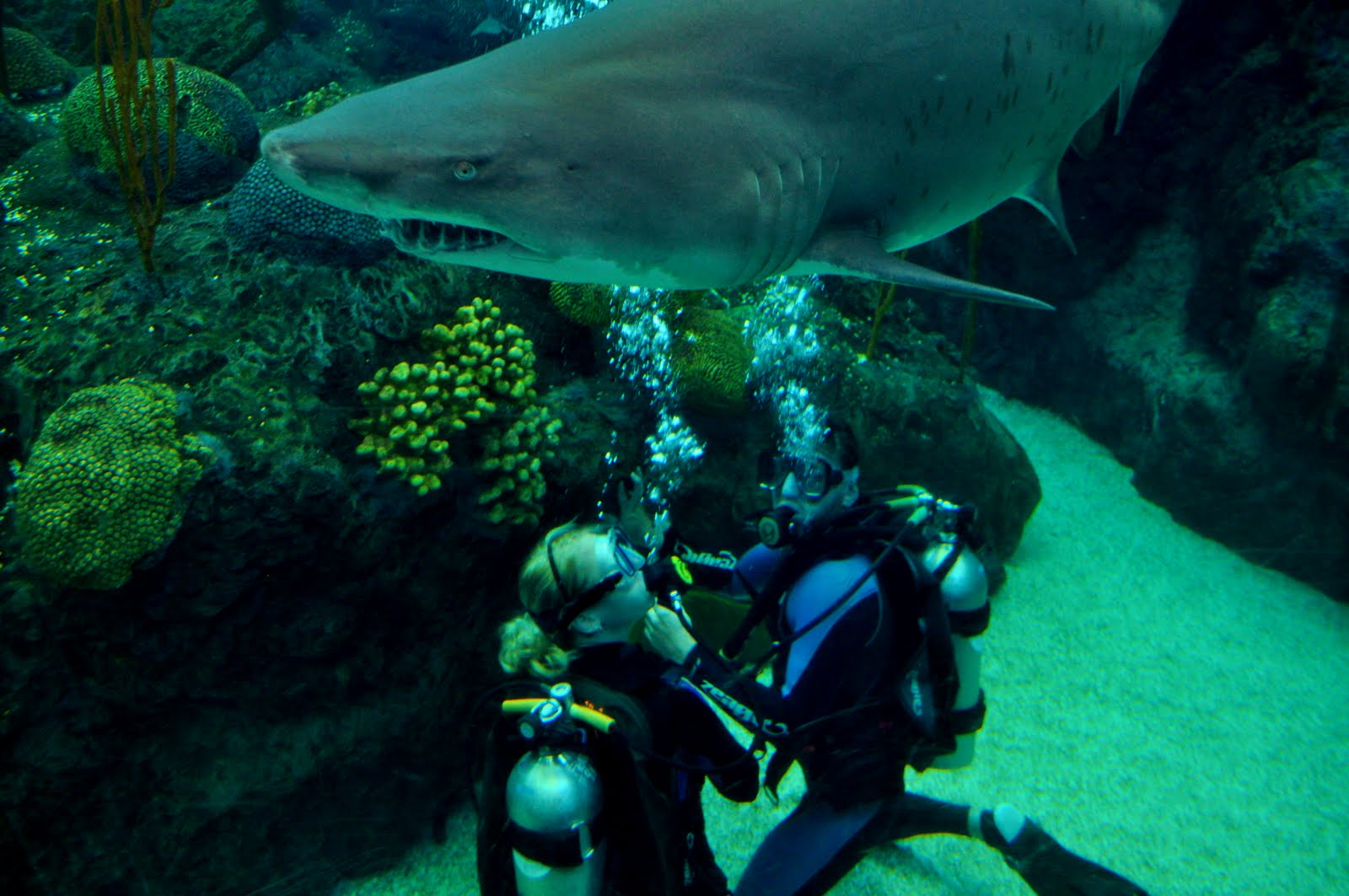 Diving With Sharks At The The Florida Aquarium In Tampa