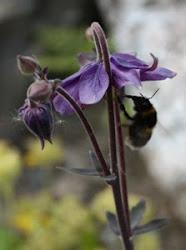 Trädgårdsföreningen Acchleja