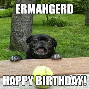 happy-birthday-funny-dog-meme-images