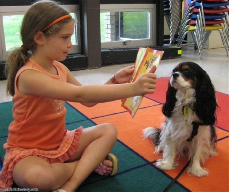 3. Read to dogs by HHHCL