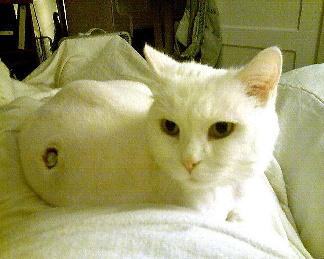 Famciclovir Side Effects Feline