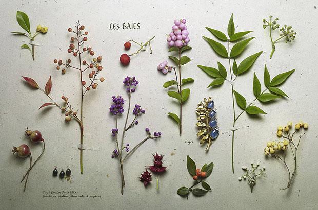 fotos,Peter Lippmann,photographs,art,cartier,magazine,bayas,bajes,plantas,plantsjewelry