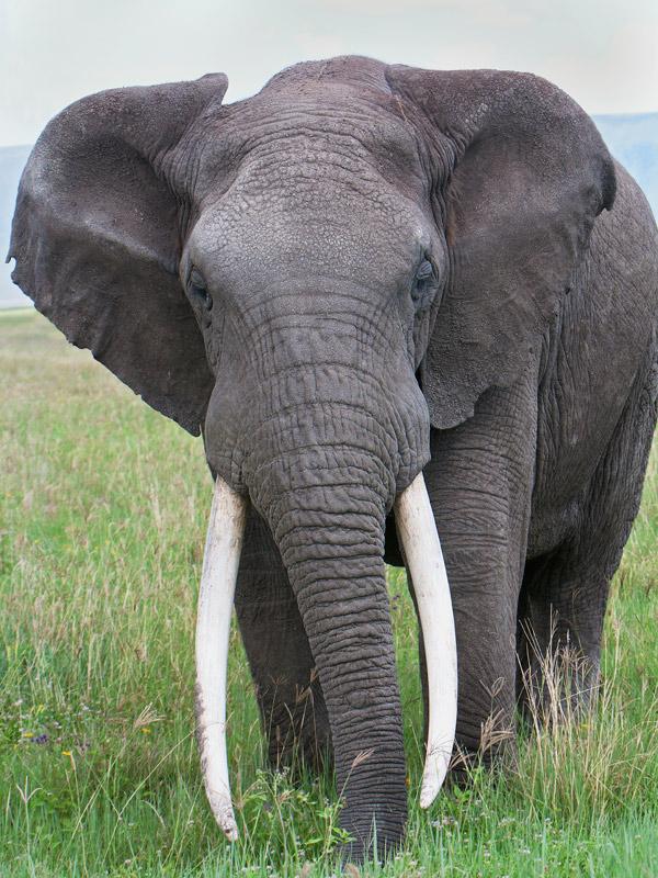 Elephant Nature Park Checklist