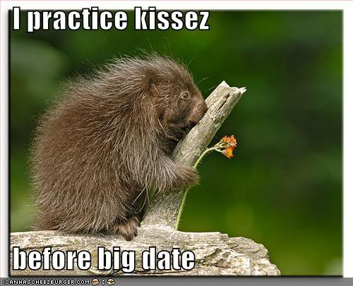 Funny Love Quotes With Animals : funny animal and funny wallpaper funny animals with funny quotes funny ...