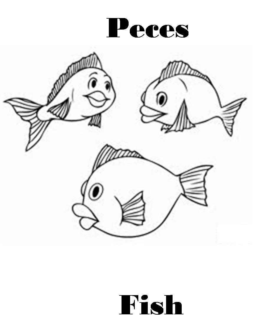 Imagenes para dibujar en Ingles y español: Animales ...