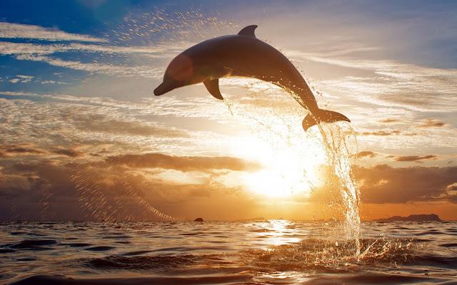 Fotos e Imagenes de Delfines Saltando al Atardecer