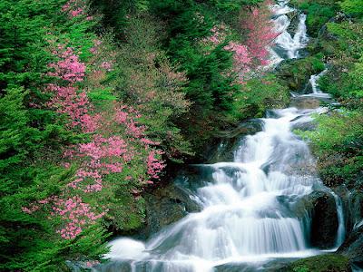 Linda cascada adornada de flores
