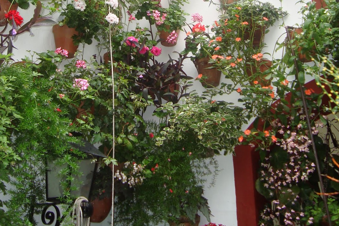 Faw arquitectura y geograf a las 10 mejores plantas Plantas limpiadoras de aire