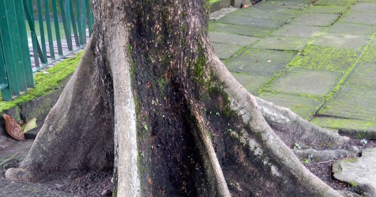Wild Burma Nature S Lost Kingdom Chasing Tigers