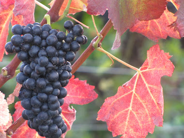 Purple Grapes / Red Leaves