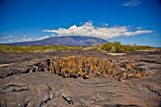 Shield Volcano, Rugged Lava Rock, Lava Cactus, Galapagos Islands