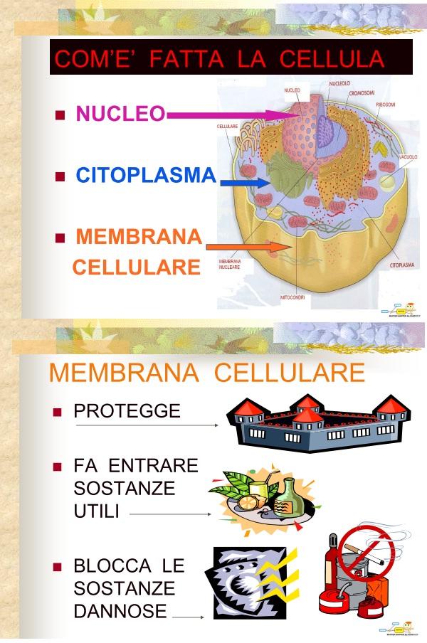 mapper  cellula