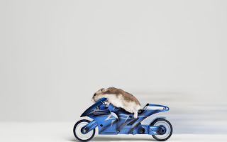 mouse riding motorcycle (28)