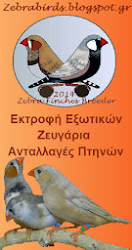 Zebra Finches Breeder