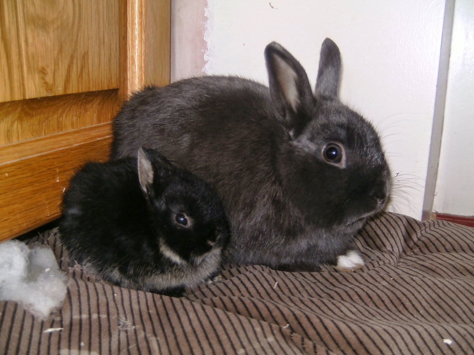 father & son, bebe, mr socks, rabbits