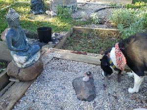 Pippin and the Buddha