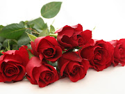 Rosas rosas rojas
