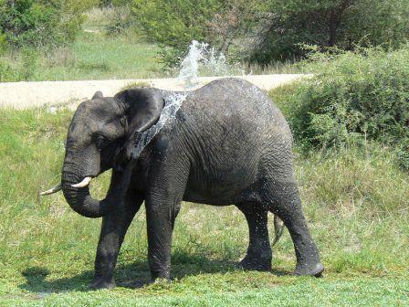 Elephant-Shower