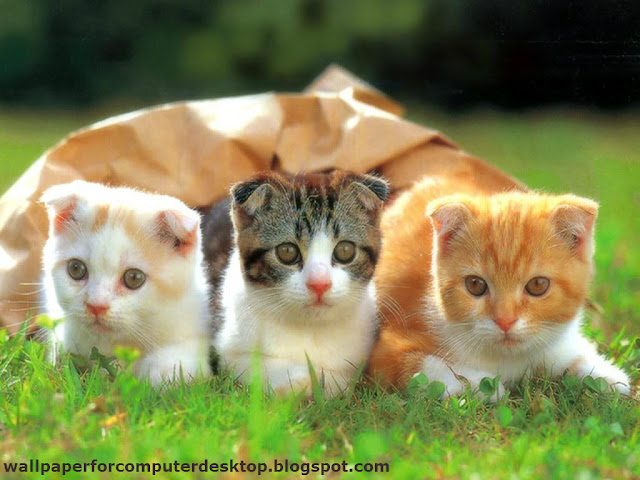 Cute cats Wallpaper | Animals