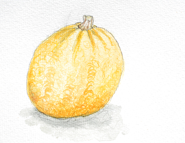 drawing of pumpkin small sugar