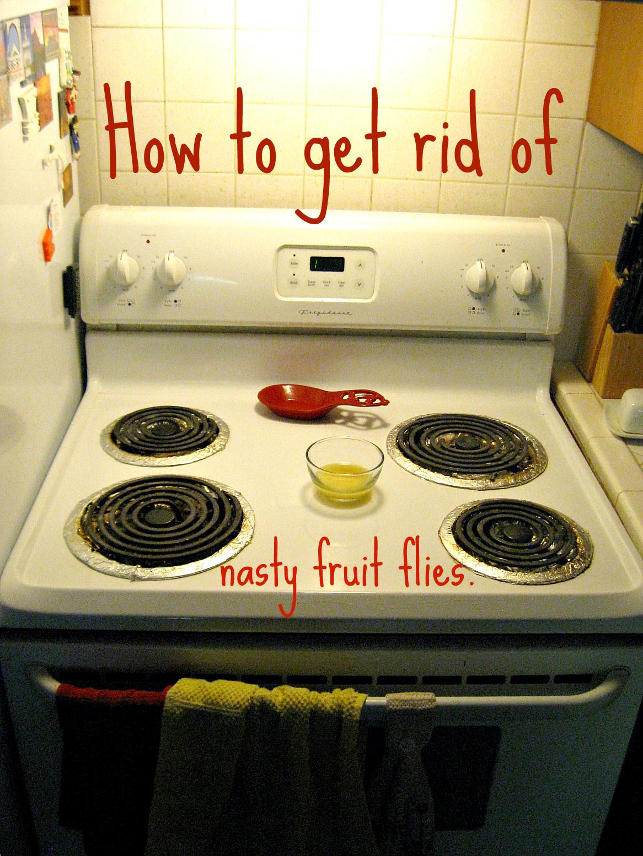 Marvelous How To Get Rid Of Fruit Flies