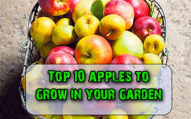 Top 10 apples to grow in your garden