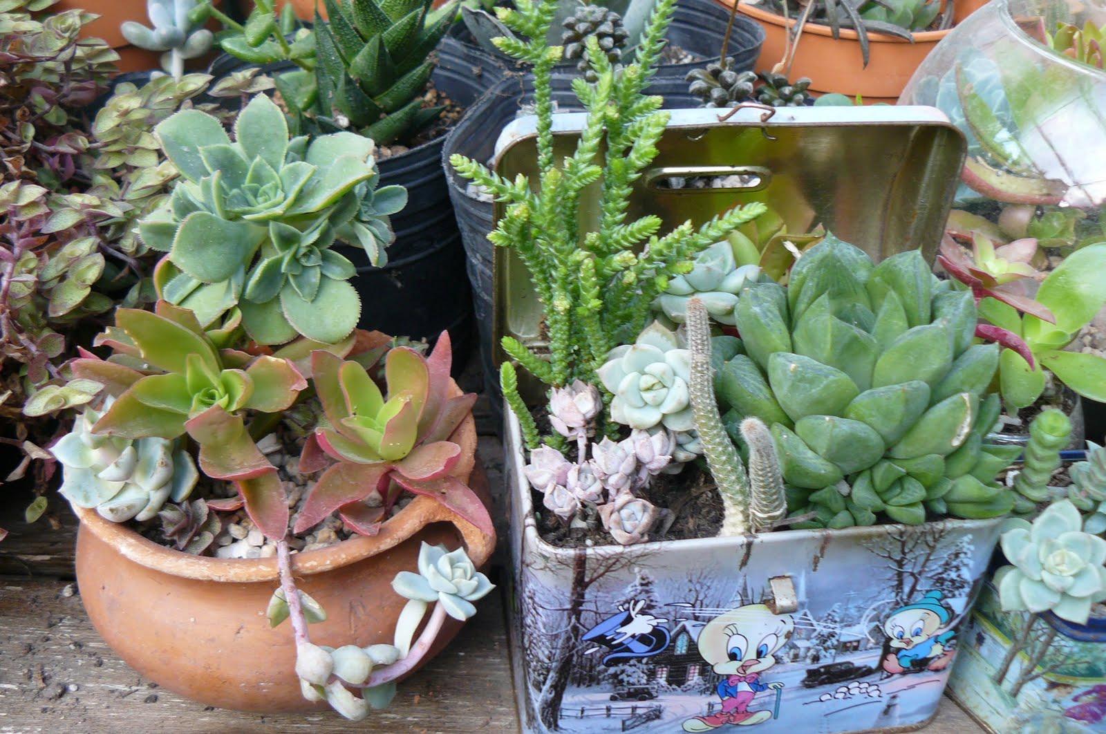 Jardines de cactus y suculentas jardines para regalar for Jardines con cactus