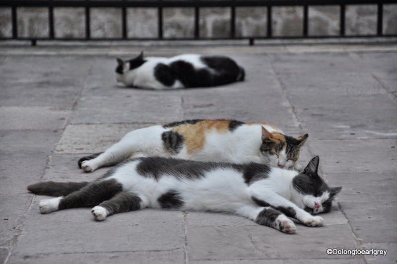 Napping cats, Dubrovnic, Croatia