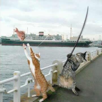 imágenes graciosas de gatitos