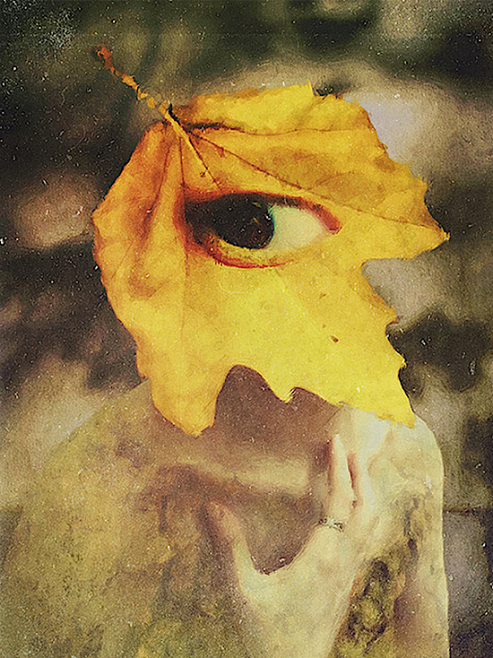 The Spirit of Autumn © Pu the Owl