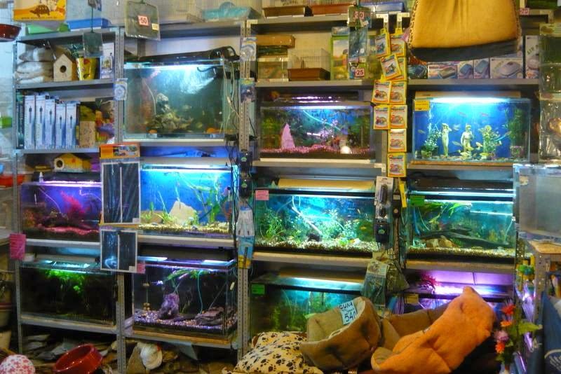 Guía básica de acuarios (mi primer acuario) parte IV ACUARIO%2B4