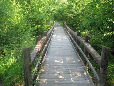 Bridge along the Limberlost trail