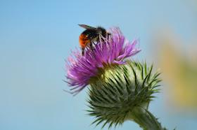 Summer bumblebee
